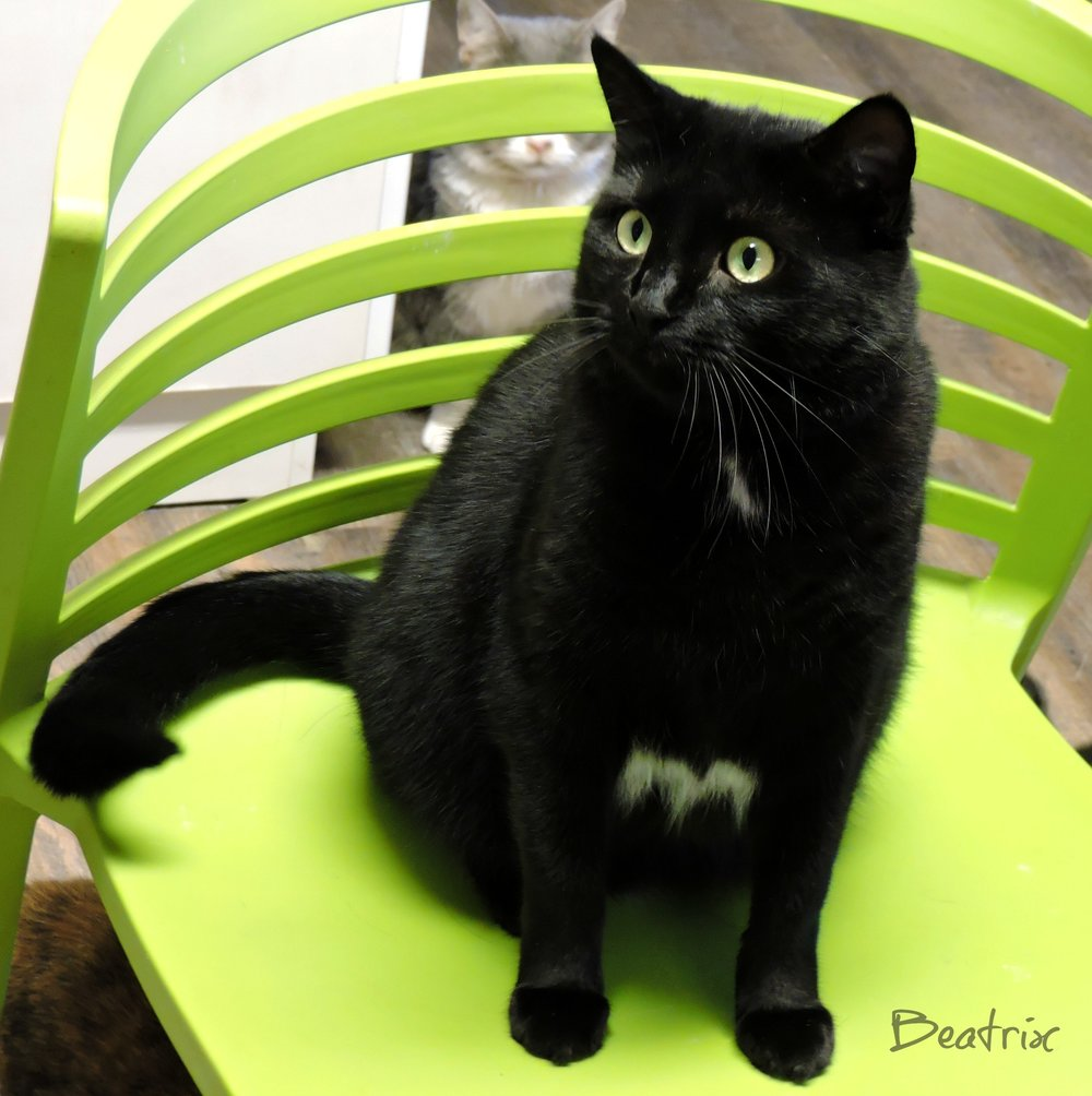 Beatrix - ADOPTED! -