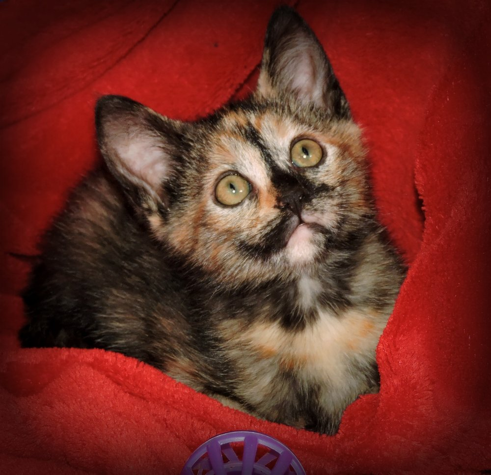 Buttercup - ADOPTED! -