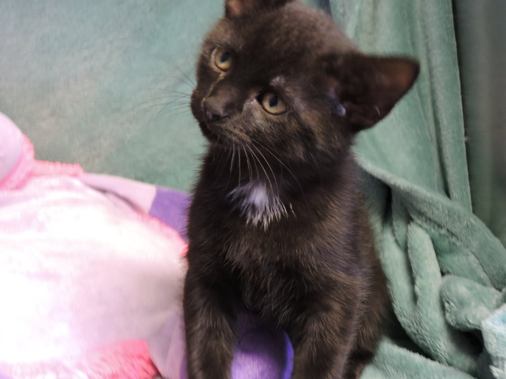 Pip - ADOPTED! -