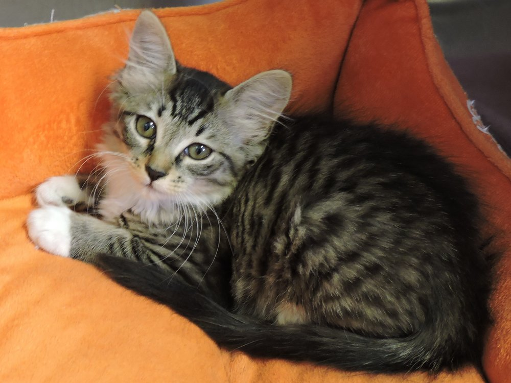 Pebbles - ADOPTED! -