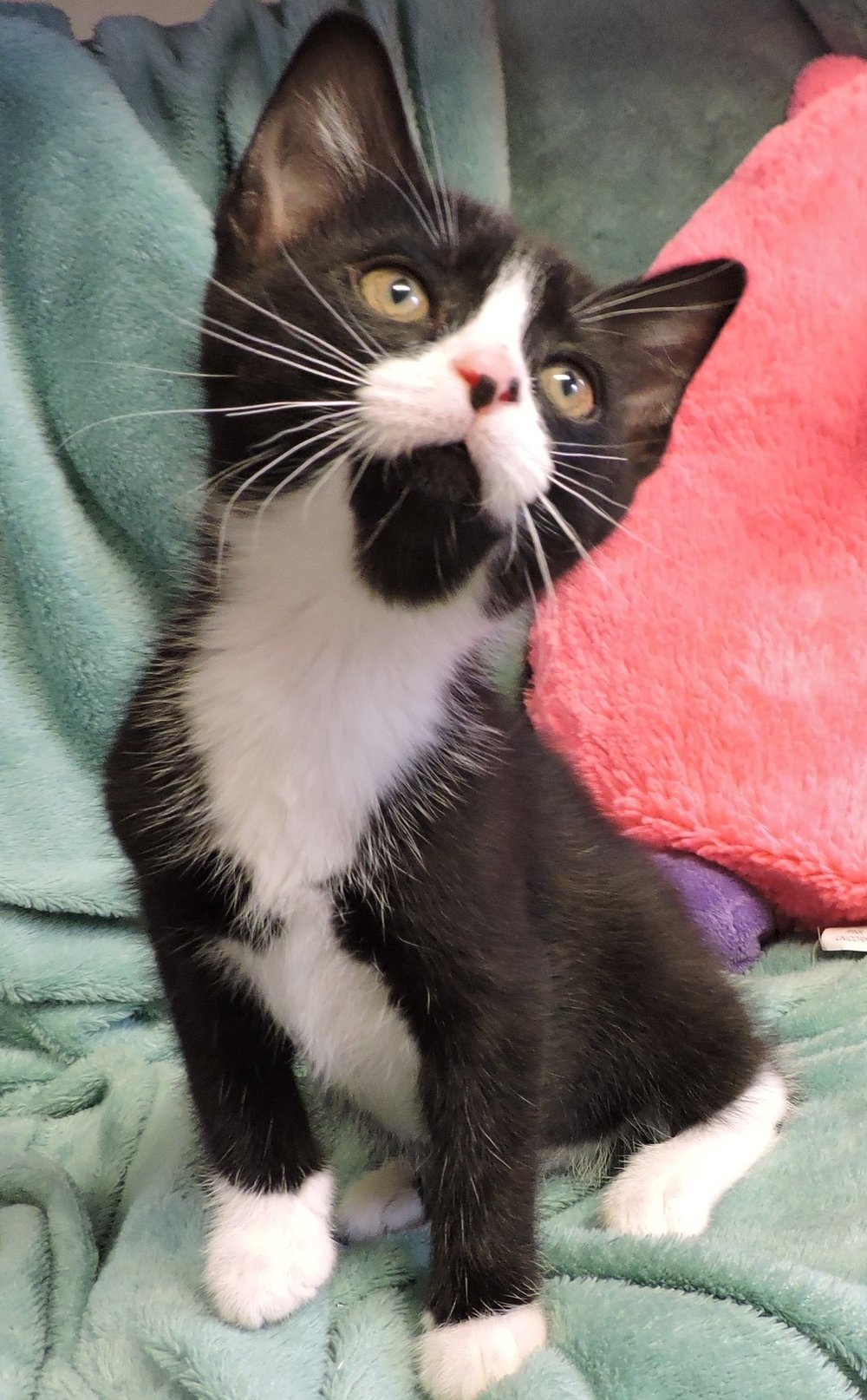 Indy - ADOPTED! -