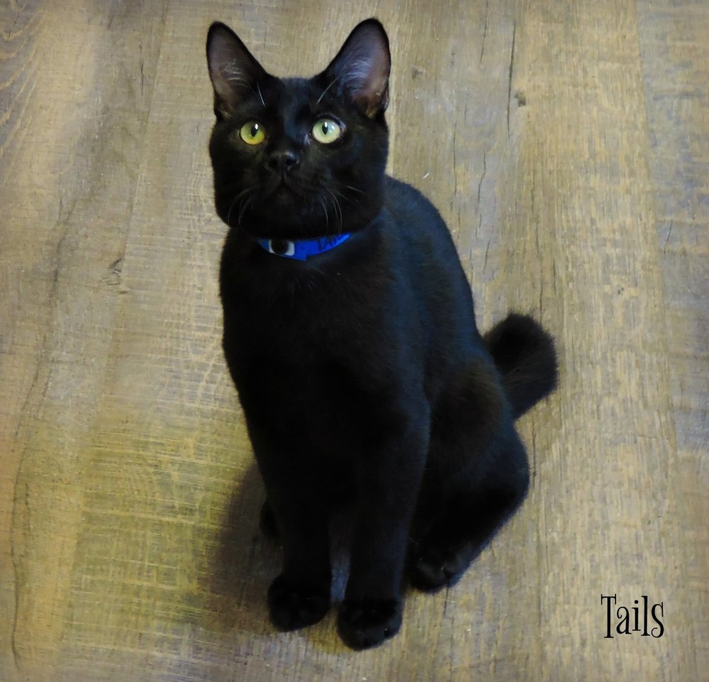 Tails - ADOPTED! -