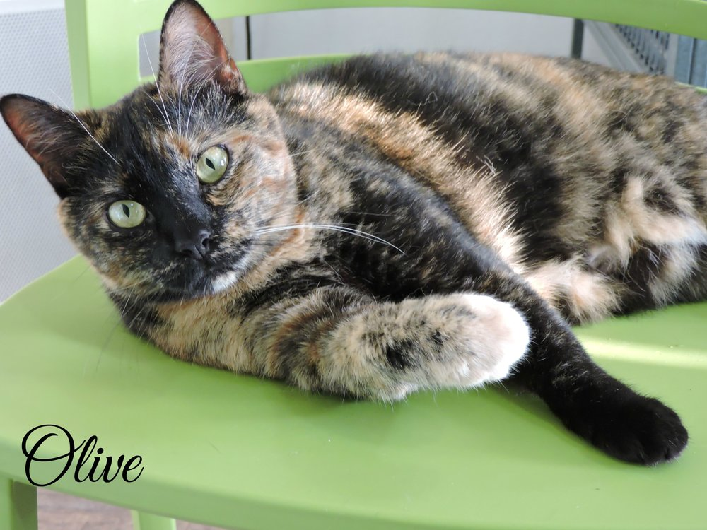 Olive - ADOPTED! -