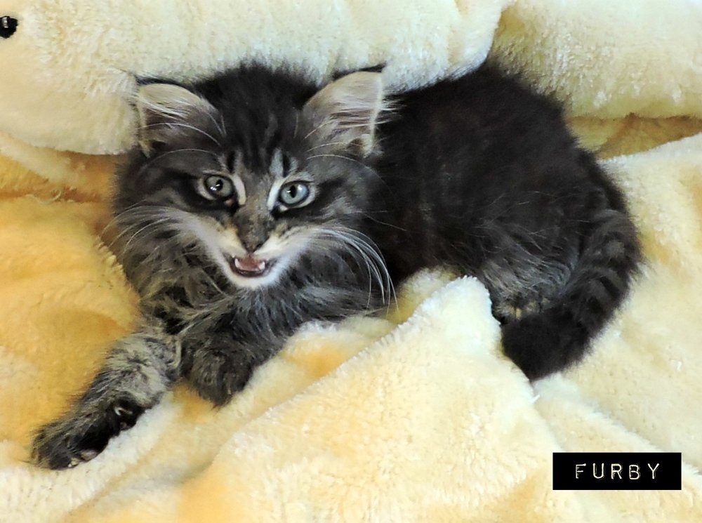 Furby - ADOPTED! -