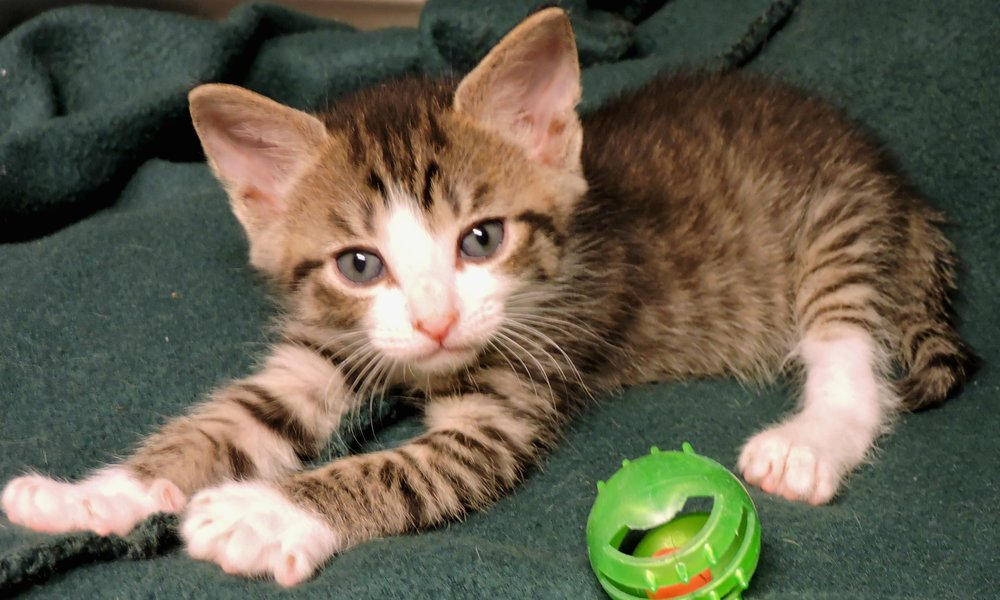 Goliath - ADOPTED! -
