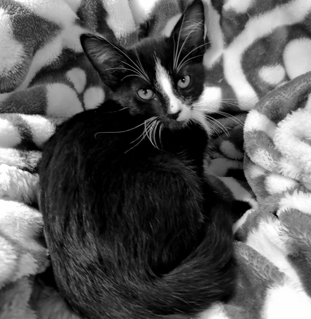 Ollie - ADOPTED! -