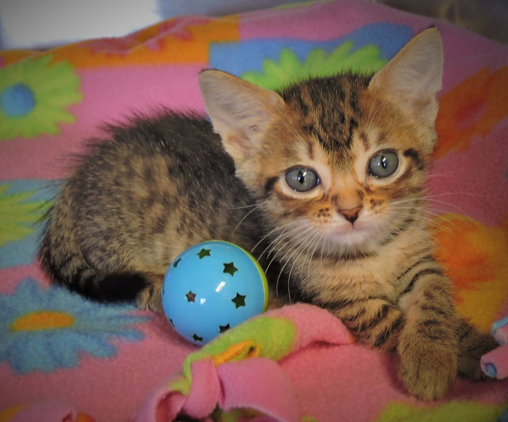 Taffy - ADOPTED! -
