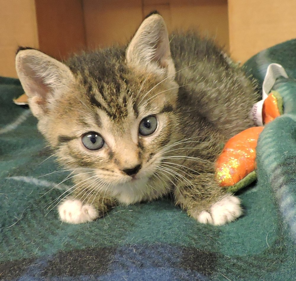 Scampi - ADOPTED! -
