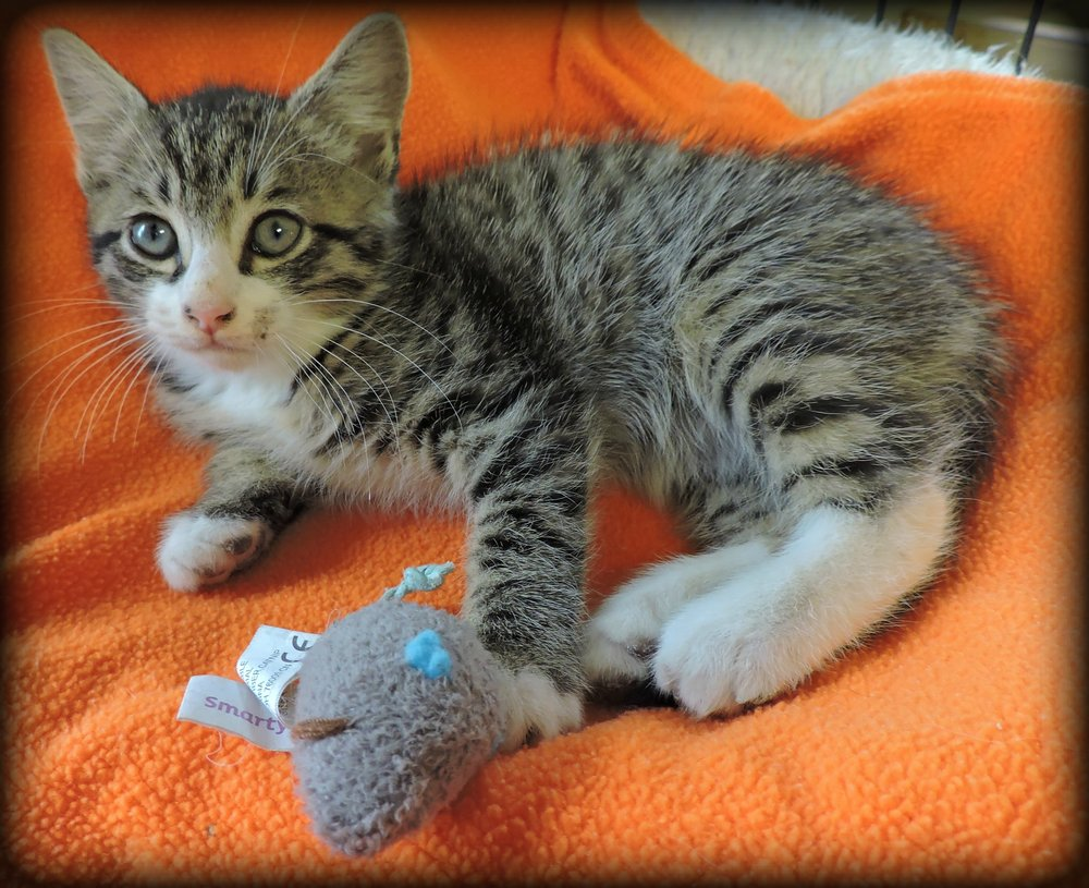 Charming - ADOPTED! -