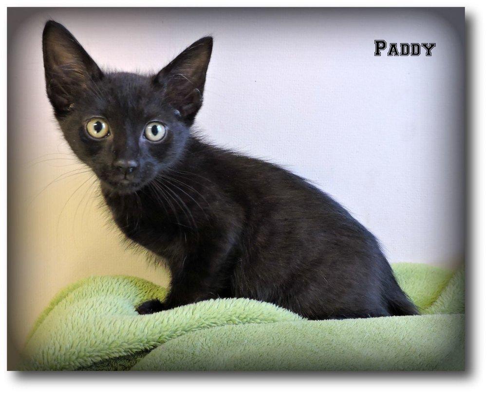 Paddy -