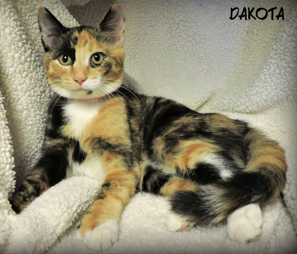 Dakota -