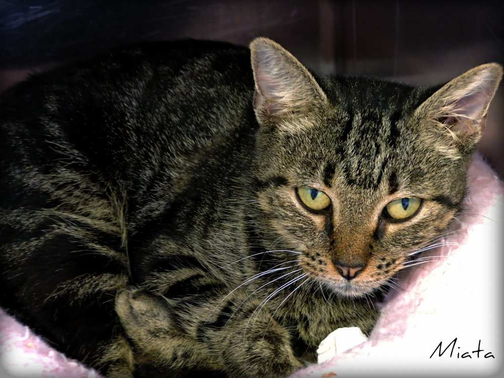 Miata - Young adult female; former mama looking for a stable, caring homelife -