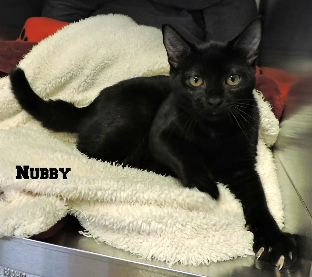 Nubby -