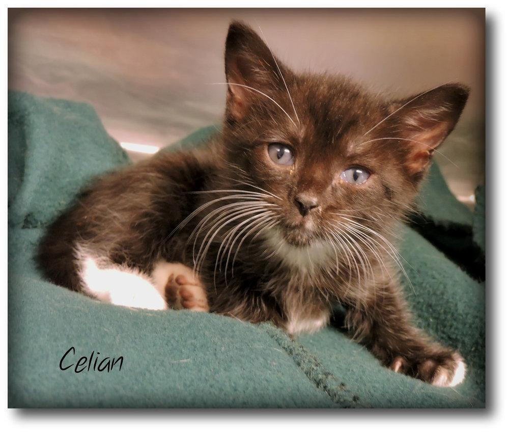 Celian -