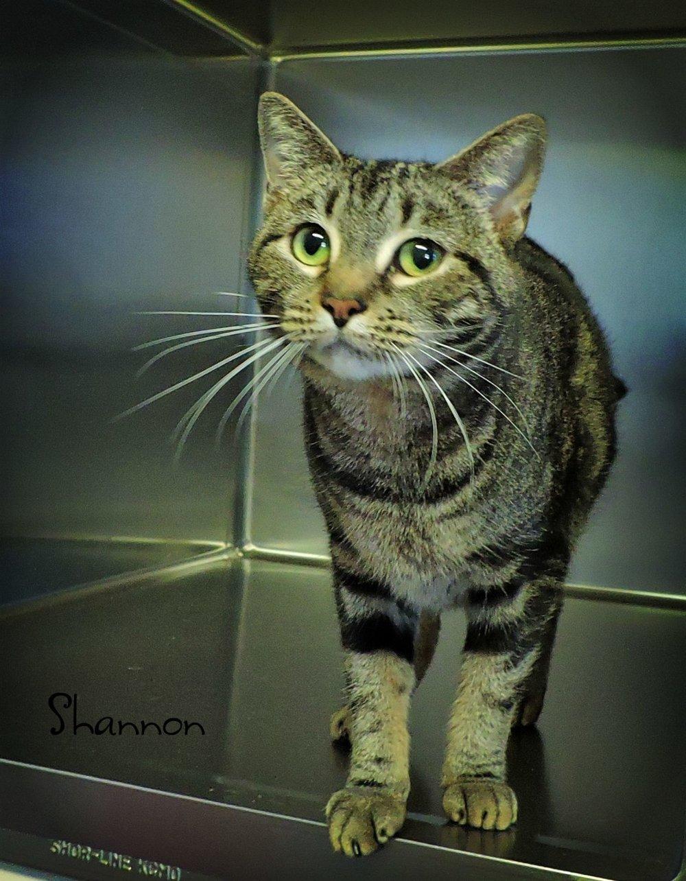 Shannon -