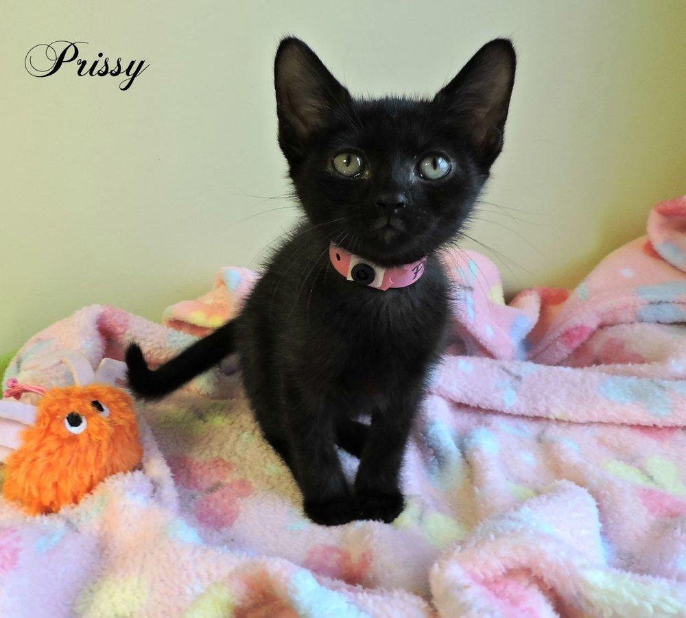 Prissy -