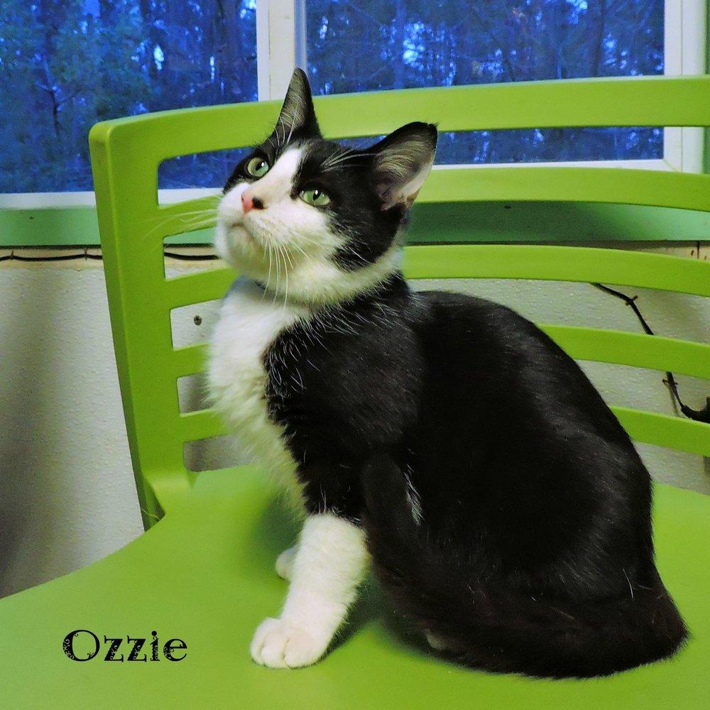 Ozzie -