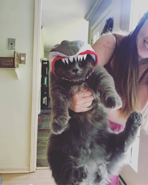 My cat, Moxa, in his halloween costume. He's a shark. He loves it, really.