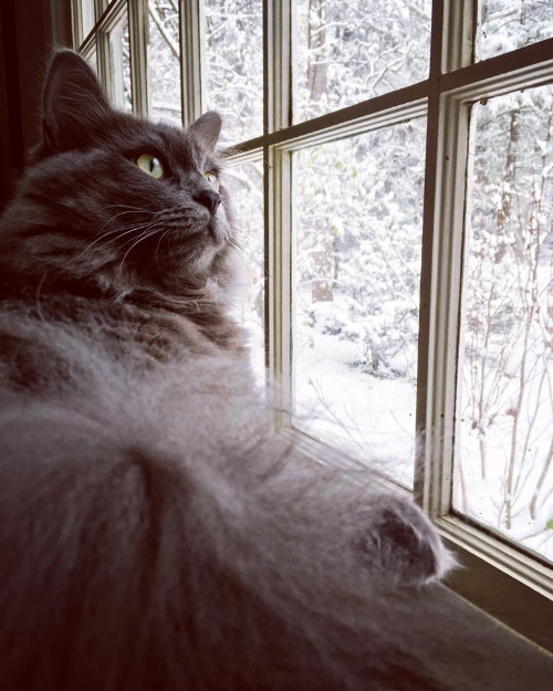 Moxa's first snow. He's chirping at the birds and trying to paw at snowflakes.