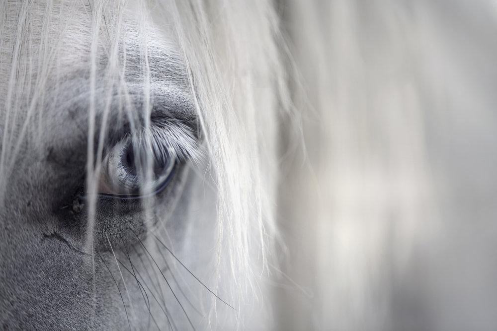 horseStock2.jpg
