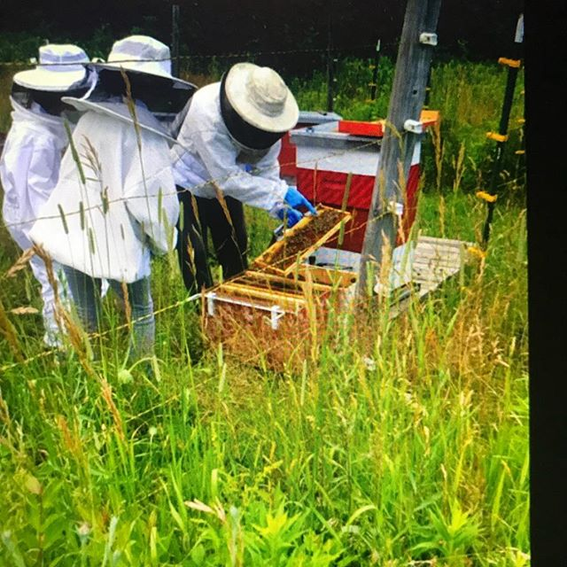 Newbees. #beekeeping