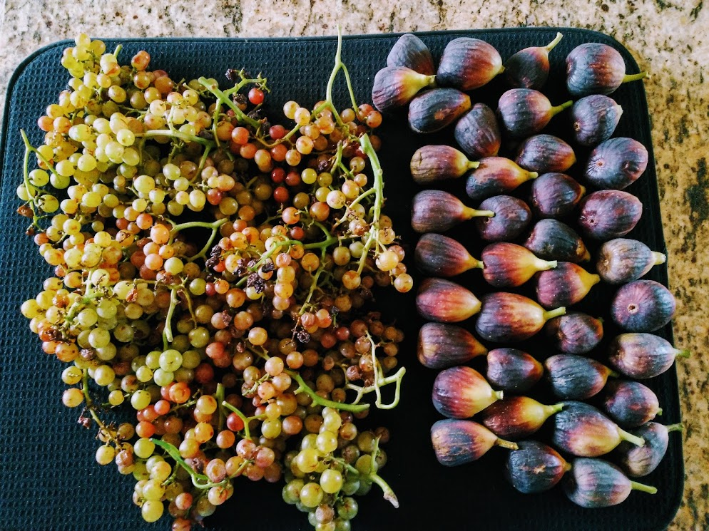 Grapes and Figs.jpg