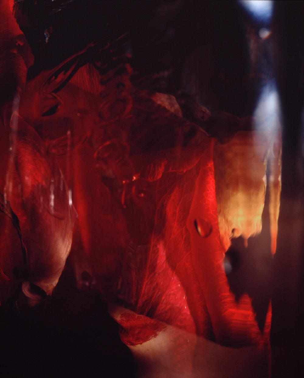Rose #4 , 1996