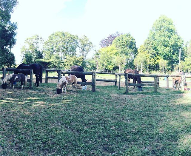 Peaceful breakfast. #earthhorse #omnomnom