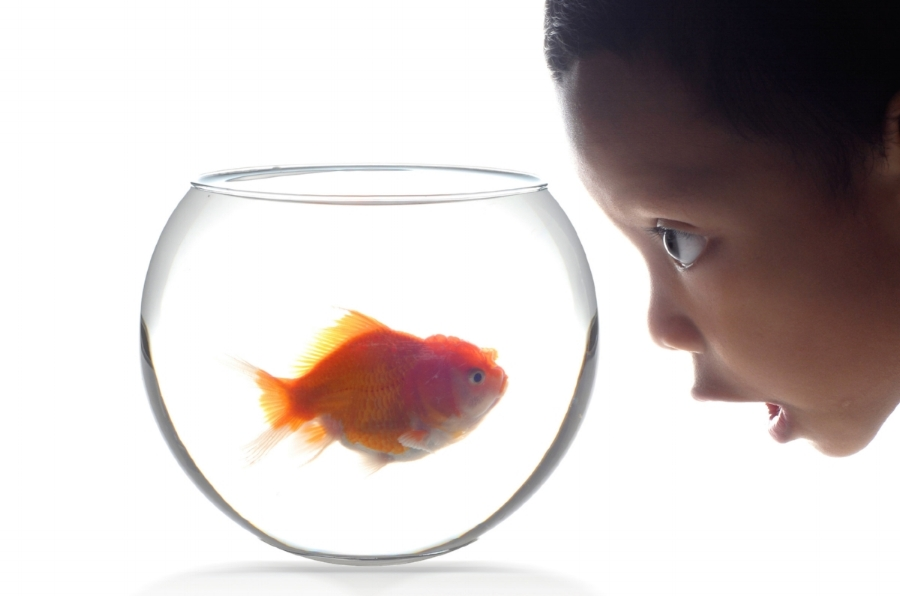 A recent study shows that we can no longer hold our attention as long as a goldfish. Our inattention has far-reaching implications at home and at work.