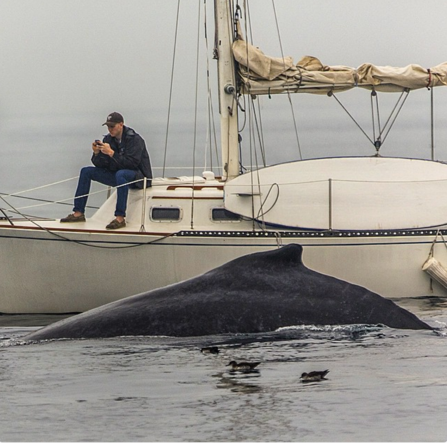 This clip from a video shows a California sailor so fixated on his phone that he completely missed a close encounter from a humpback whale. The person who took the video described it as a larger commentary on our general state of distraction.