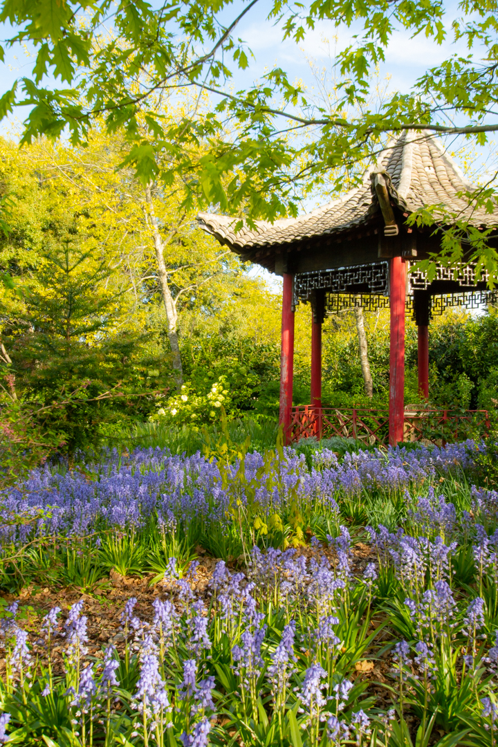 Chinese Pavilion in November, the end of Spring in Australia.