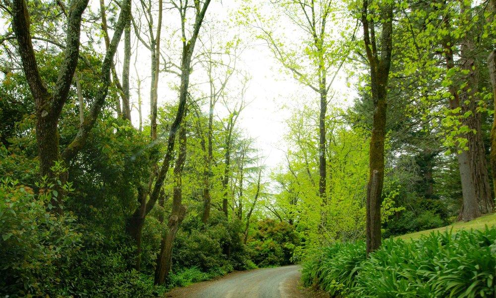En route Wombat Hill Botanic Gardens & Tower Hill Memorial