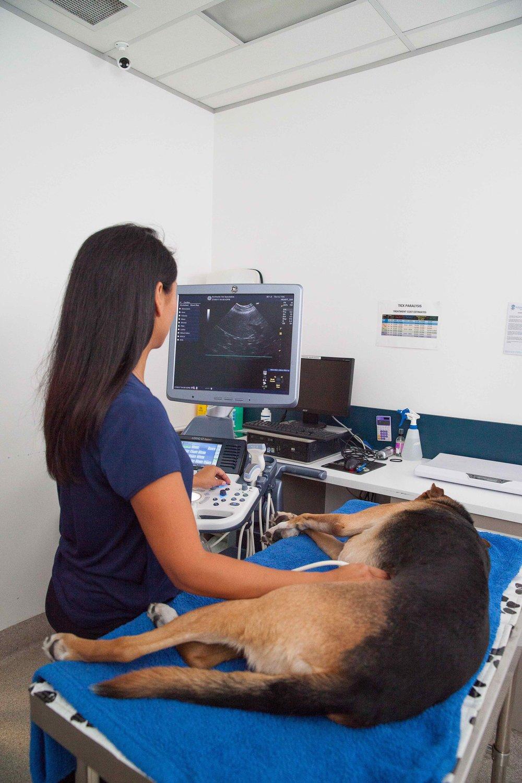 KC ultrasound