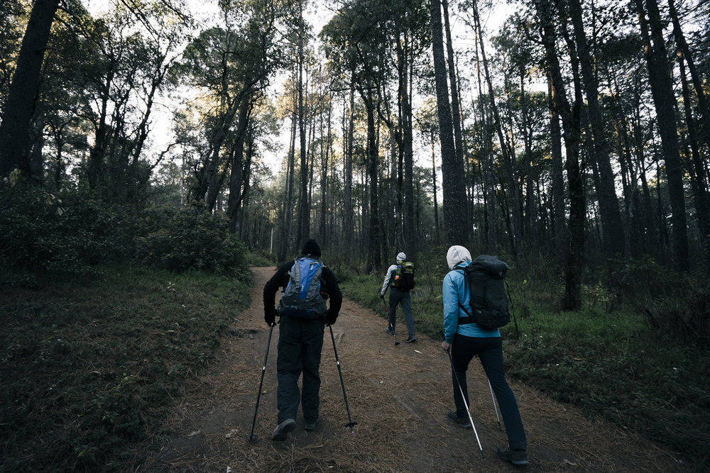 First day on the hill, the crew starts up La Malinche amongst the trees.