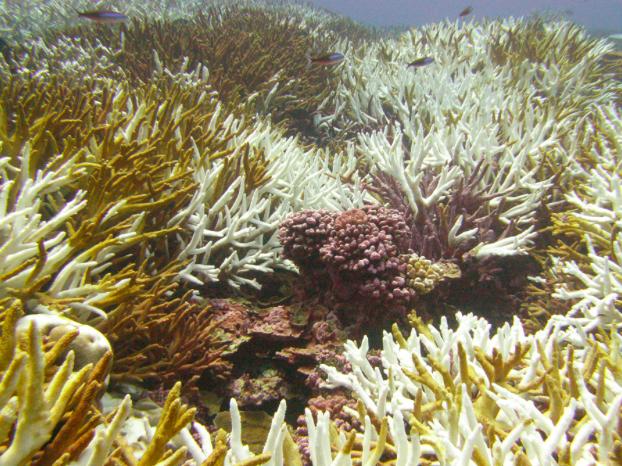 (NOAA, Bernardo Vargas-Ágel)