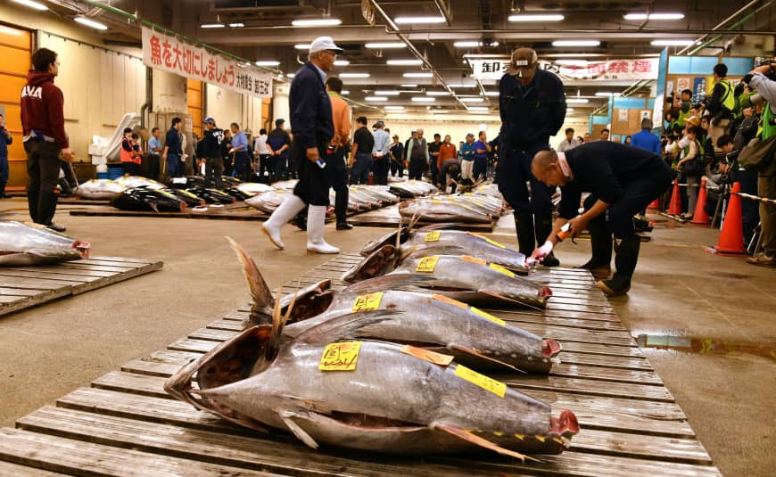Wholesalers examine fresh tuna prior to the last auction at the Tsukiji fish market in Chuo Ward of Tokyo on Oct. 6, 2018.  Photo: Yoshiaki Miura/Japan Times