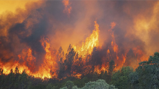 Ravaging Forest Fires in California earlier this month. Credit:  Mark McKenna