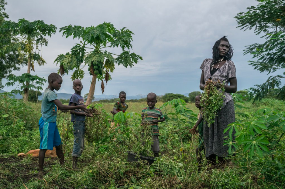 A South Sudanese refugee, Queen Chandia, takes care of 22 children by harvesting land in Uganda that local residents have been lending to her. Credit: Nichole Sobecki/ New York Times