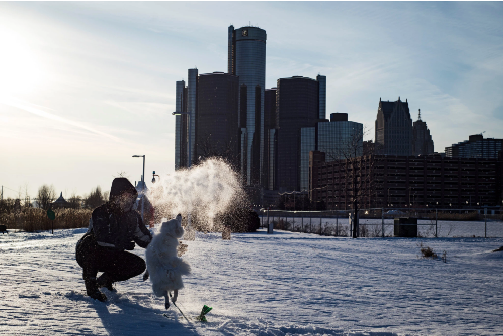 A dog playing in the snow in Detroit on Thursday morning. Photo: Emily Rose Bennett/  New York Times