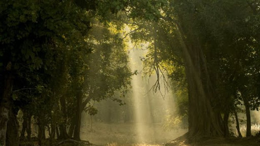 Deciduous forest in India. Photo Credit: Science Photo Library  BBC