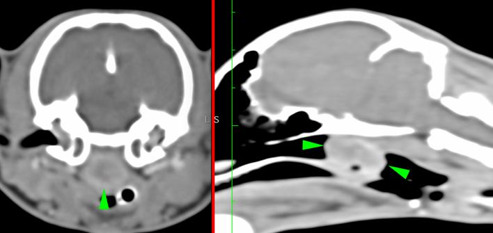Corte transversal de cabeza de un gato con un pólipo inflamatorio que se extiende desde la bulla derecha hacia la nasofaringe a través de la trompa de Eustaquio. Esto causa obstrucción completa de la luz de la nasofaringe, desplazando el paladar blando en dirección ventral. La masa realza periféricamente de manera marcada.