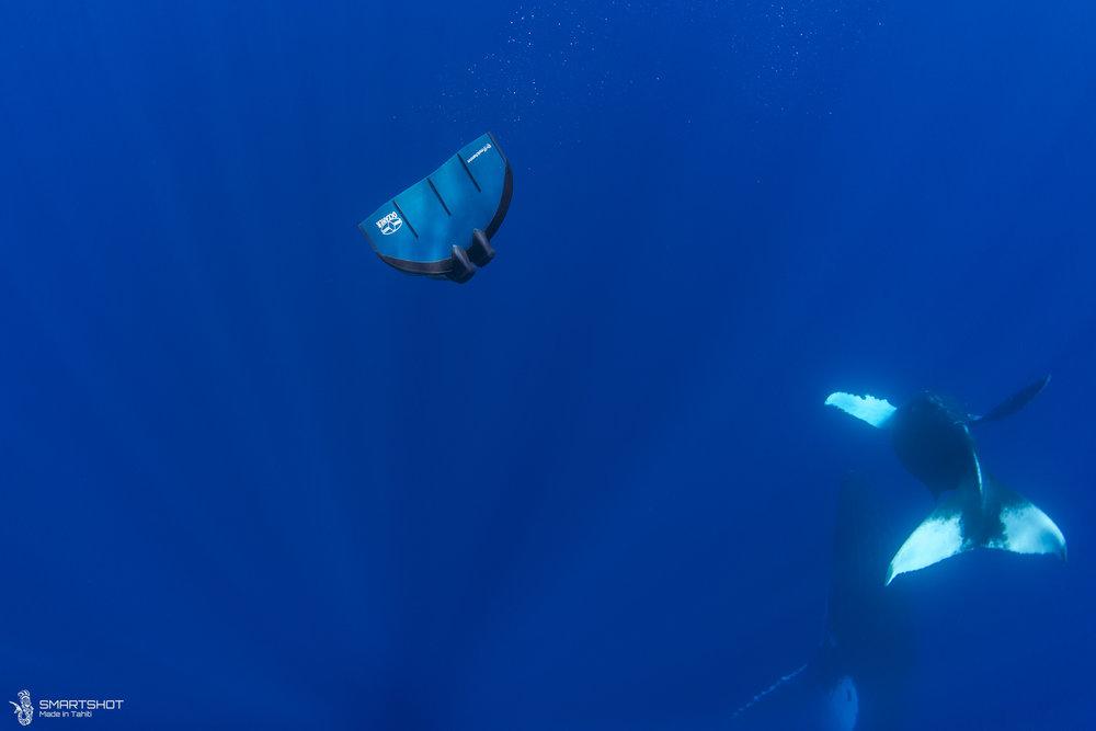 171022_Julia-Whales_Smartshot_039.jpg