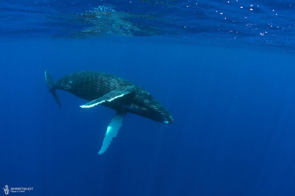 171022_Julia-Whales_Smartshot_045.jpg