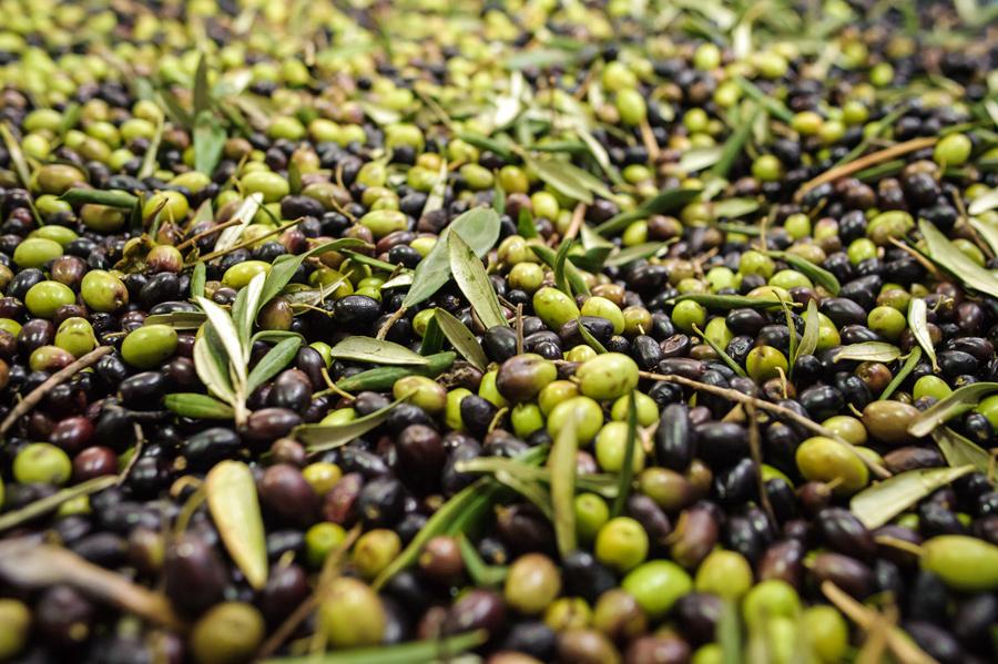 morgenster-olives-tray.jpg