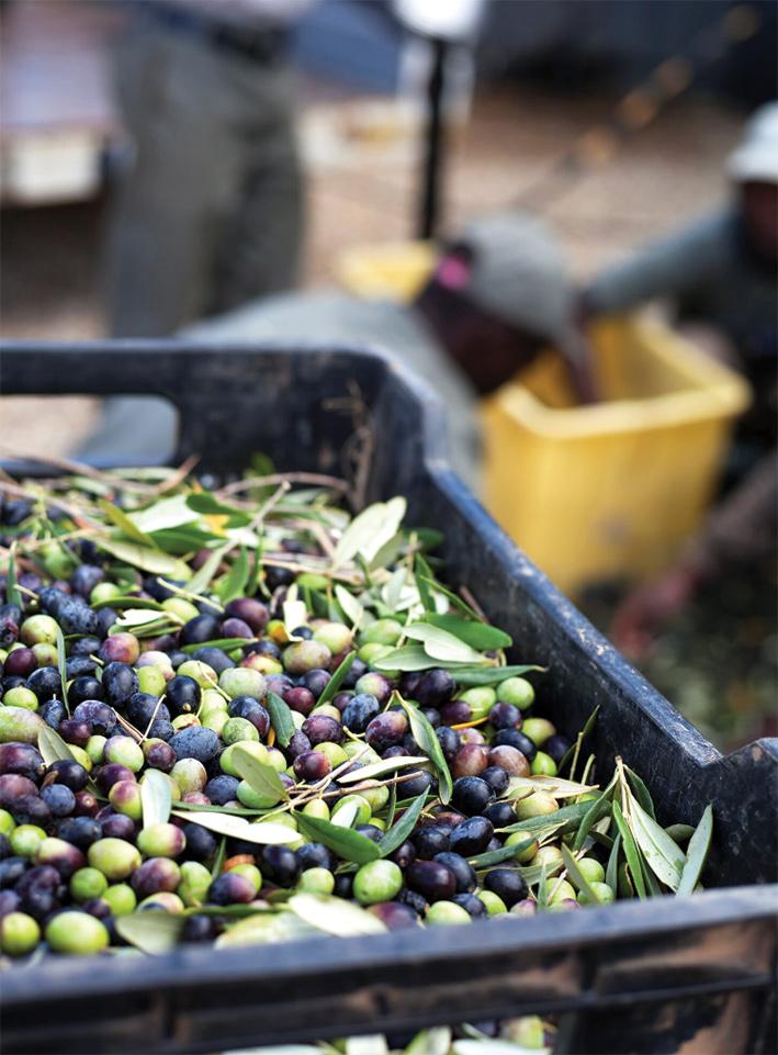 rio-largo-extra-virgin-olive-oil-03.jpg