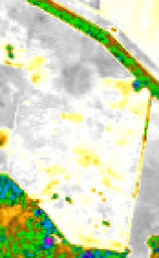 Satamap image of fallow captured in 2013 SW of Moree. Yellow/green areas are higher biomass