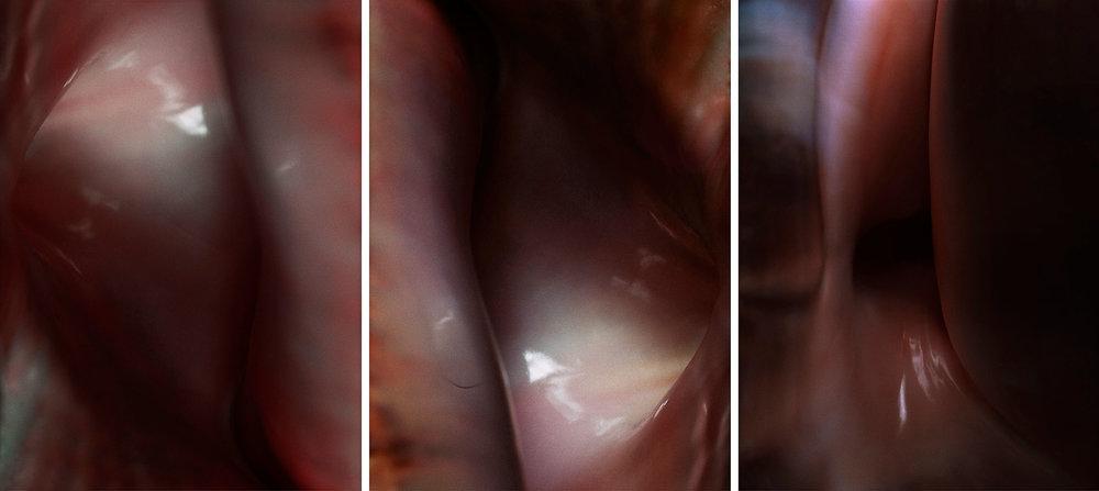 Flesh  Triptych N°5, 2004/2015 Tirages argentiques sur film duratrans, 3 caissons lumineux 144 x 104 cm chacun | C-prints on duratrans, 3 light boxes, 56,69 x 40,94 inches each  4/4