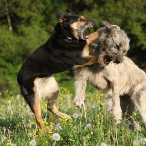 DogAgressionLead-300x300.jpg
