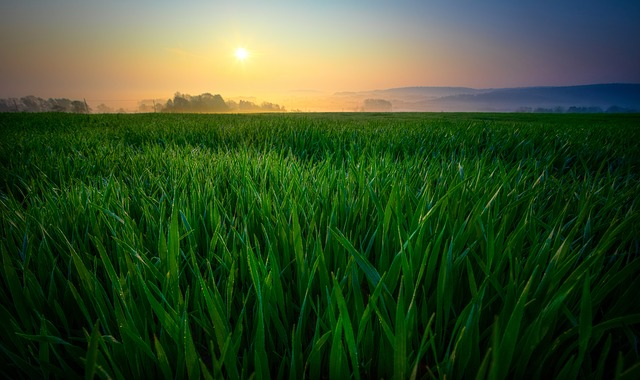 maxpixel.freegreatpicture.com-Nature-Fog-Field-Morning-Landscape-Sun-Sunrise-2224942.jpg