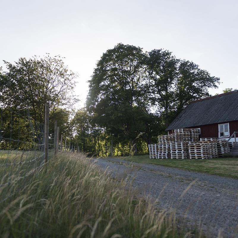 Låt Torsjö blomma! - På Torsjö Torg hittar du spännande konstutställningar med bland andra konstnärerna evap och Peter Gruvander.